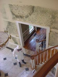 mold removal job site